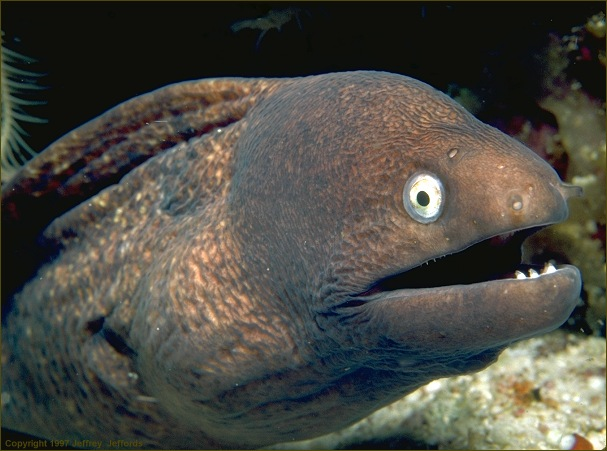 [Image: moray2_.jpg]