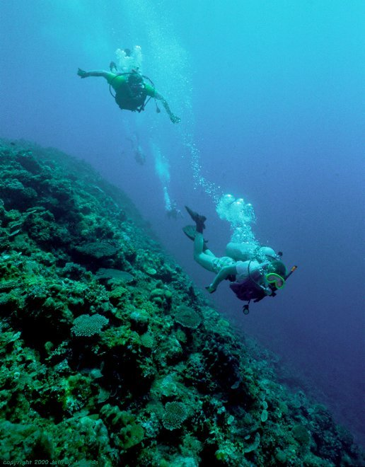 divers explore a Philippine reef [65k]